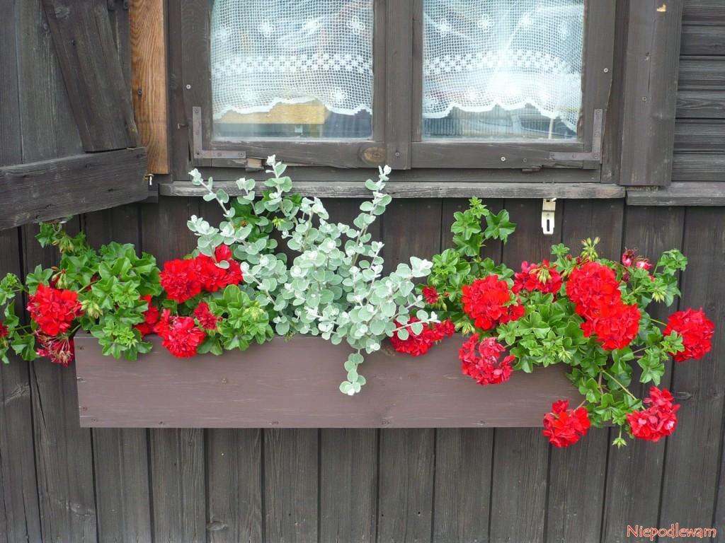 Drewniana skrzynka z kwiatami na zabytkowej Wodopójce w Białymstoku. Fot. Niepodlewam