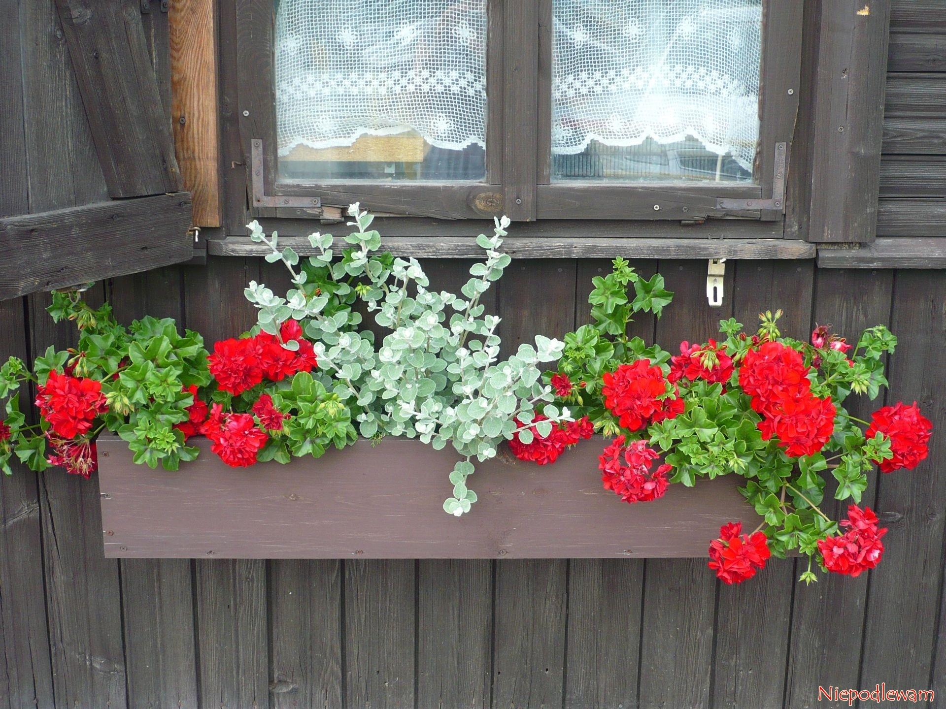 Drewniane Skrzynki Jak Sadzic W Nich Kwiaty