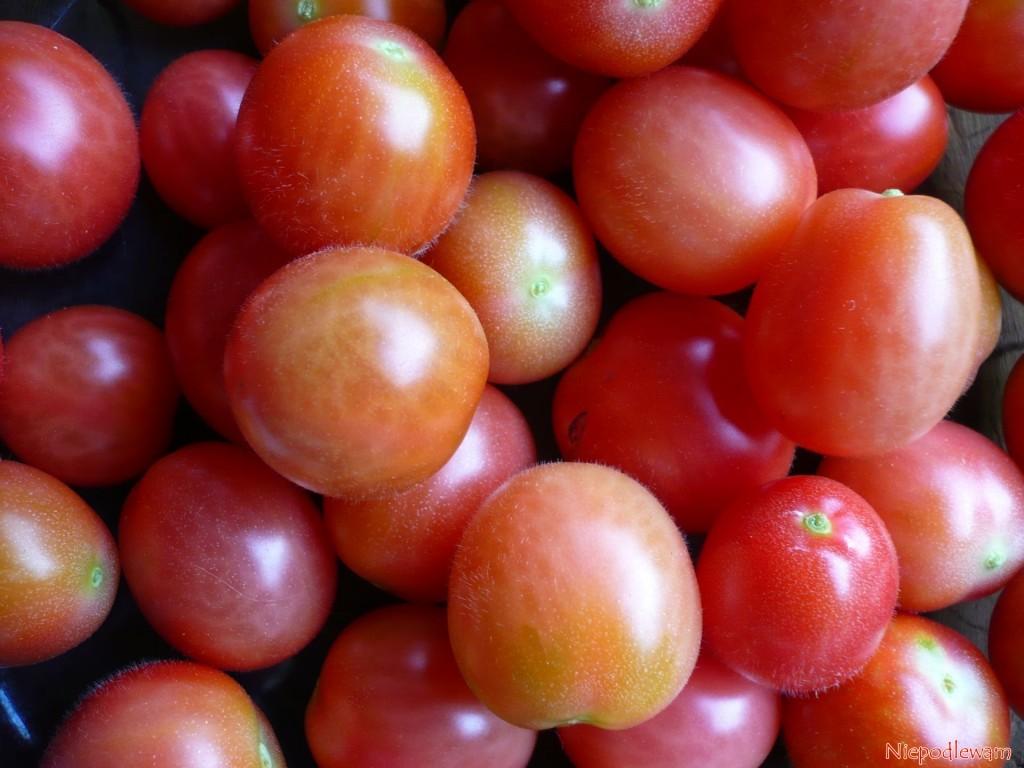 Pomidor odmiany Malinowy Kapturek