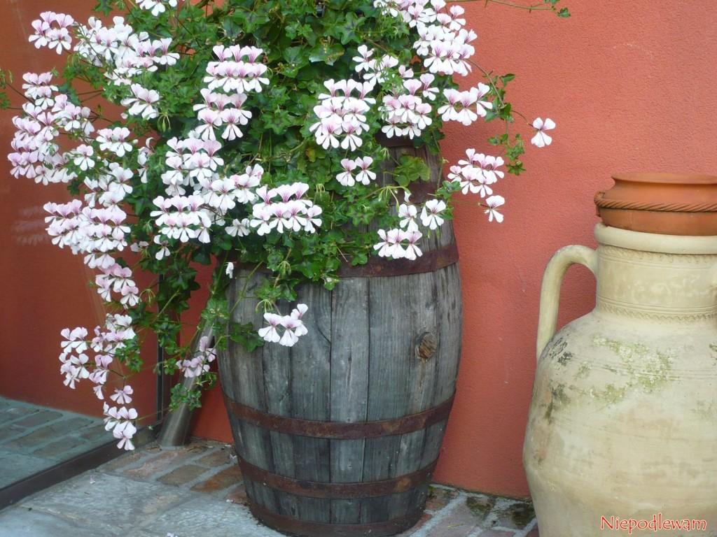 Kwiaty posadzone w beczce to piękna i stylowa  ozdoby tarasu czy balkonu. Fot. Niepodlewam