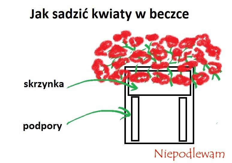 Schemat sadzenia kwiatów, np. pelargonii, w beczce. Rys. Niepodlewam