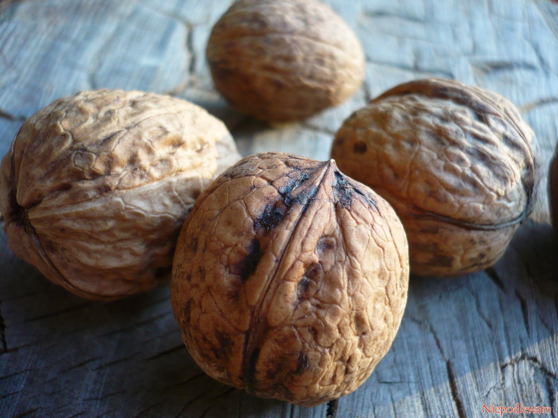 Orzechy włoskie – rozmnażanie z nasion