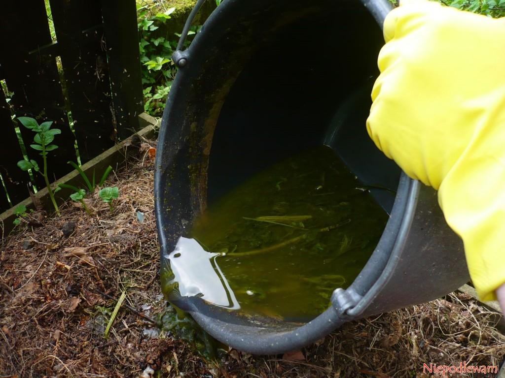 Do kompostownika można wlewać resztki gnojówki zdzikiego bzu czarnego. Kompost będzie szybciej gotowy. Fot.Niepodlewam