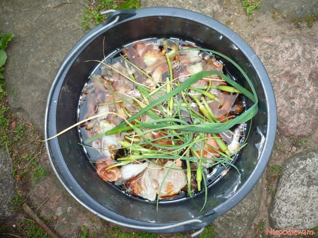 Na gnojówkę roślinną nadaje się cebula i czosnek w postaci resztek z kuchni oraz ogrodu. Fot. Niepodlewam