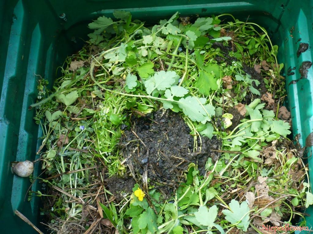 Z gnojówki roszponkowej zostaje mało resztek. To głównie ziemia, która była na korzeniach. Ślimaki ich nie lubią. Fot. Niepodlewam