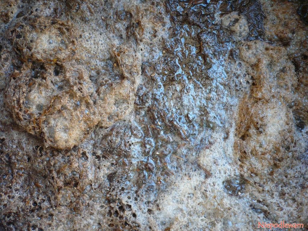 Fermentująca gnojówka z odchodów ptasich. Fot. Niepodlewam
