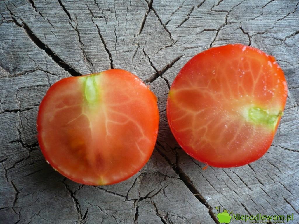 Przekrojony pomidor Tigerella. Ma mało nasion. Fot.Niepodlewam