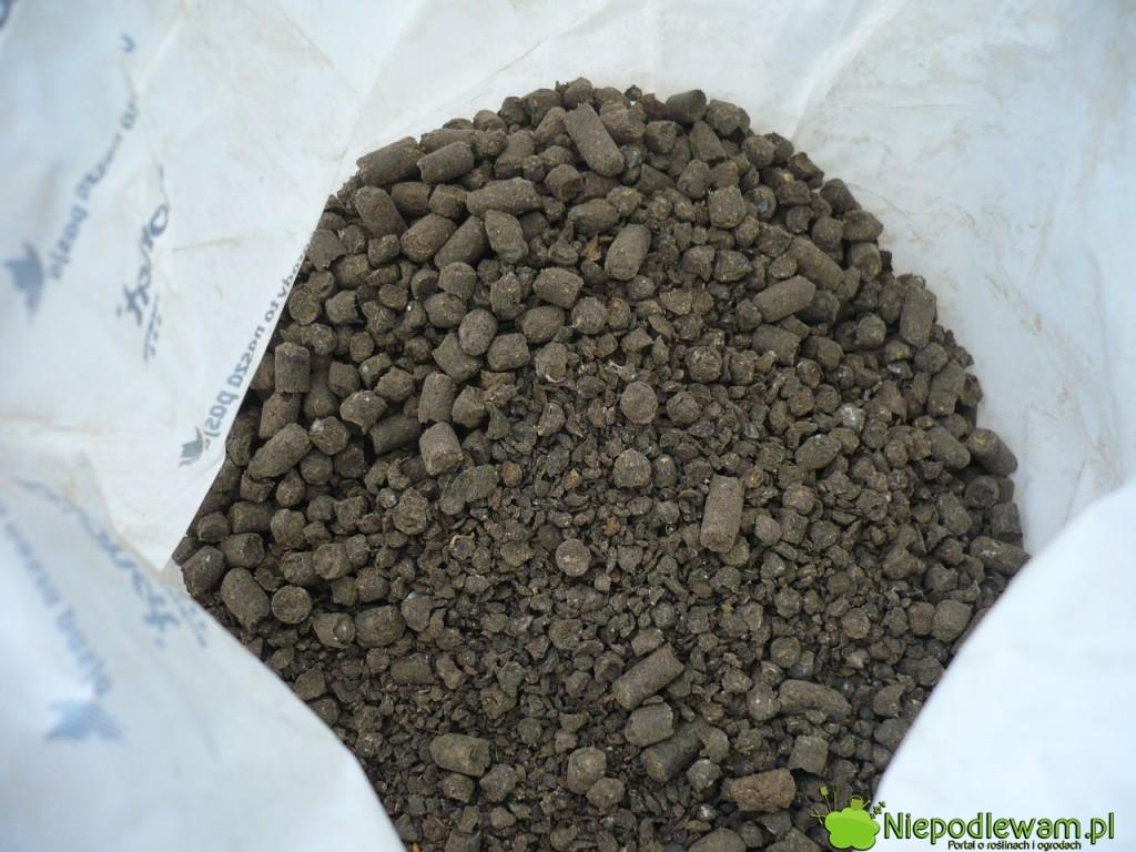 Guano granulowane w postacie gotowego nawozu. Fot. Niepodlewam