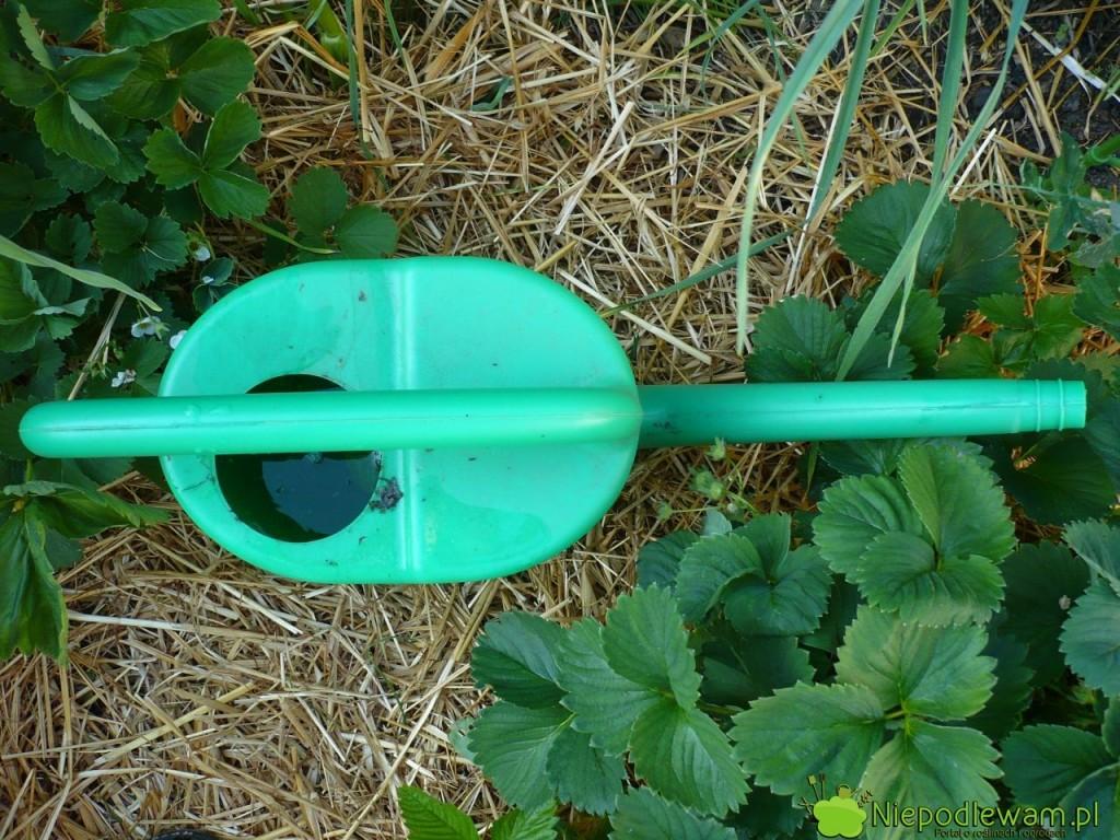 Po wlaniu do konewki wyciągiem podlewa się rośliny podgryzane przez rolnice. Fot. Niepodlewam