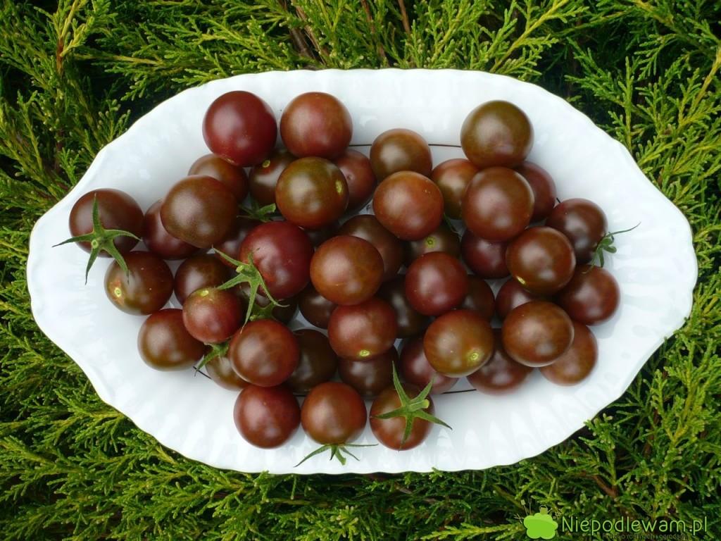 Pomidory Black Cherry wyglądają jak wiśnie lub czarne czereśnie. Są świetne wsmaku. Fot.Niepodlewam