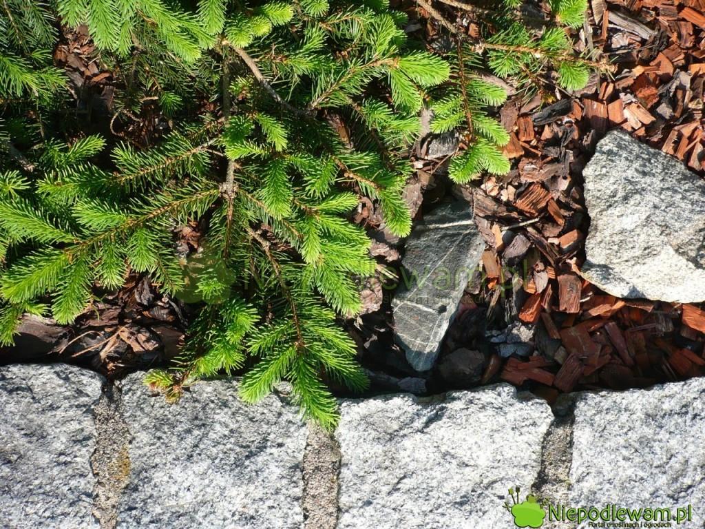 Granit to kamień, który zakwasza ziemię w ogrodzie. Fot. Niepodlewam