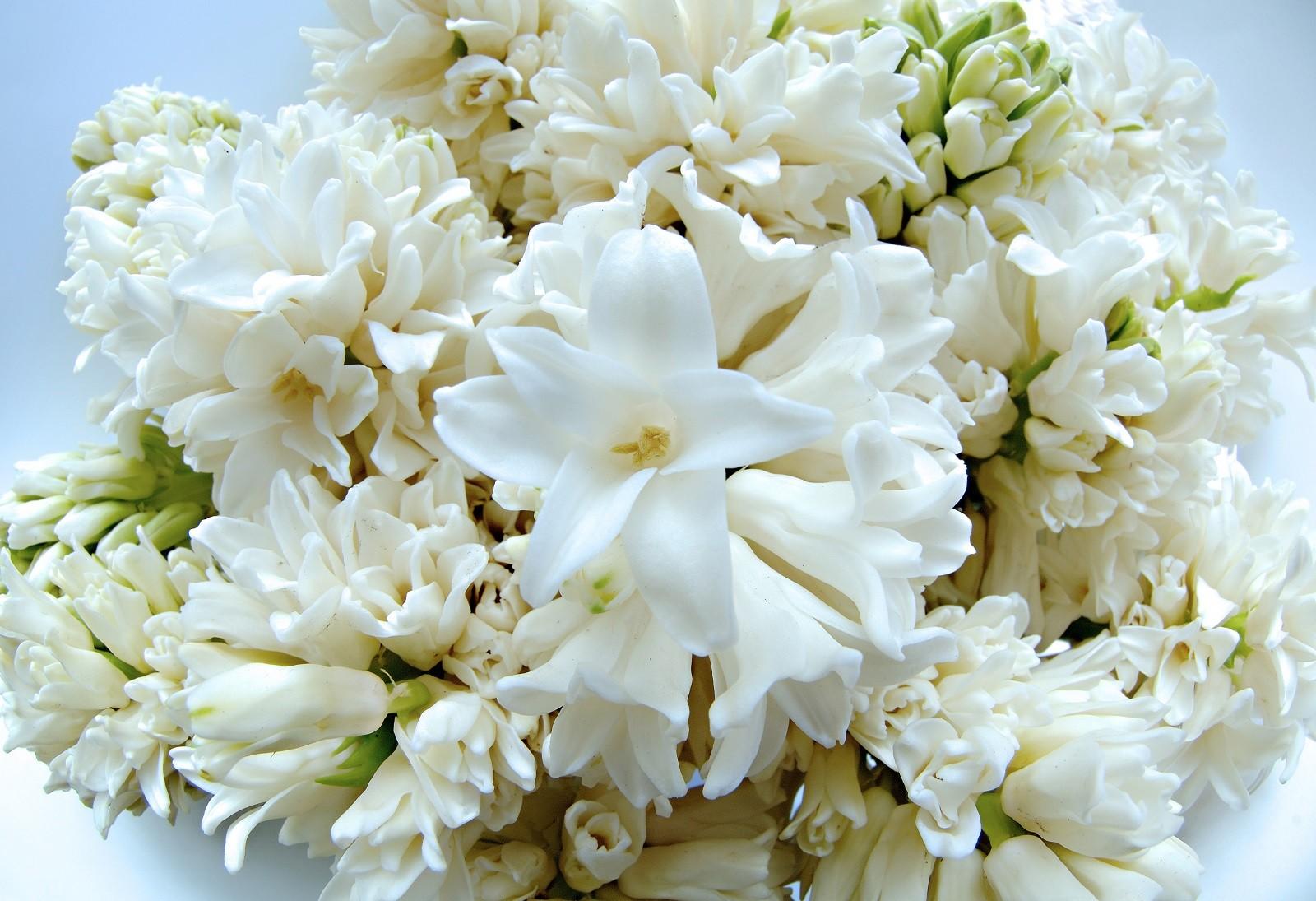 Hiacynty doniczkowe to popularna nazwa. W doniczkach są pędzone hiacynty wschodnie. Uprawia się je także w gruncie. Fot. Flower Council of Holland/thejoyofplants.co.uk