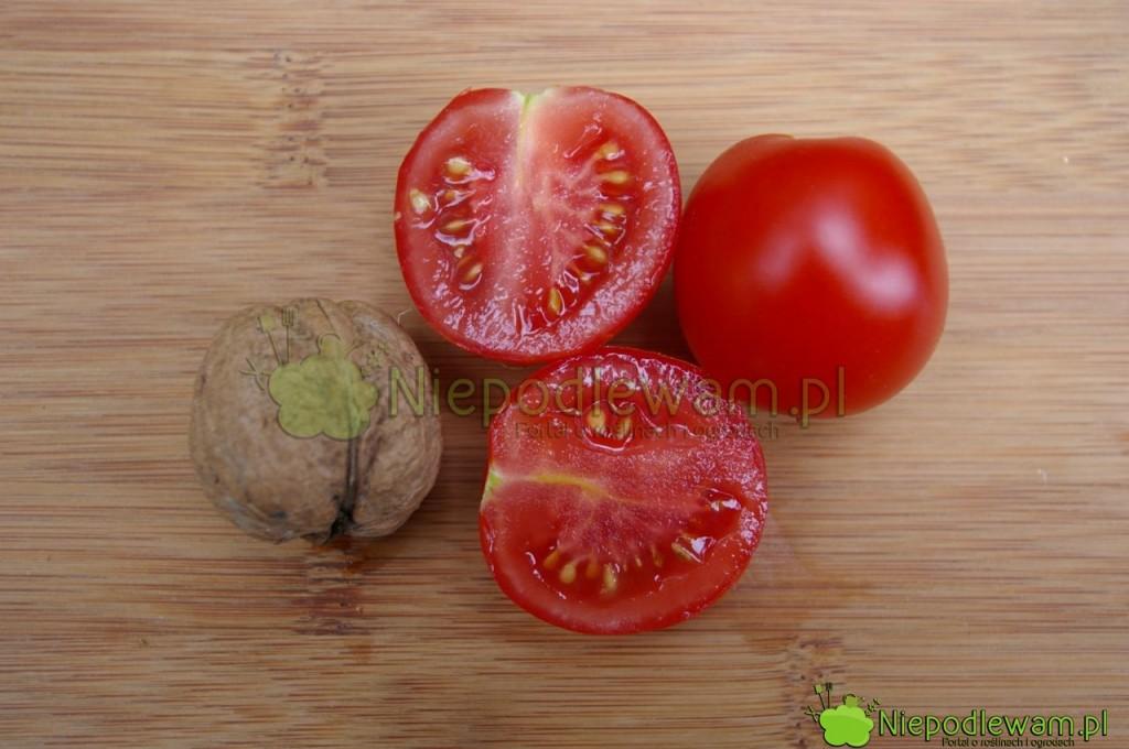 Pomidor Maskotka ma małe owoce typu koktajlowego (cherry). Są trochę większe odorzecha włoskiego. Fot.Niepodlewam