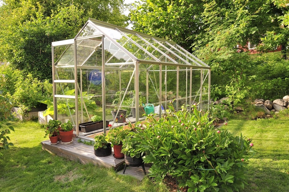 Szklarnię w ogrodzie zakłada się w słonecznym miejscu. Większość warzyw oraz figi, pomarańcze czy cytryny potrzebują dużo słońca. Fot. Shutterstock