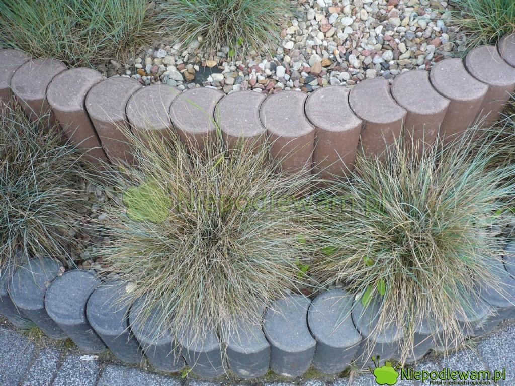 Betonowa palisada ogrodowa w dwóch kolorach. Ścieżka jest zrobiona z granitu. Fot. Niepodlewam