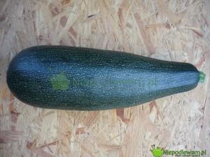 Cukinia Astra Polka ma owoce w kształcie maczugi. Fot. Niepodlewam