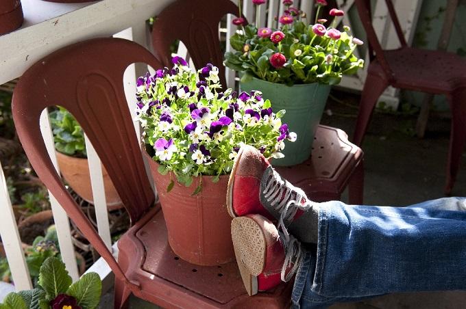 Na zacienionym balkonie dobrze rosną np. bratki. Fot. Flower Council of Holland/thejoyofplants.co.uk