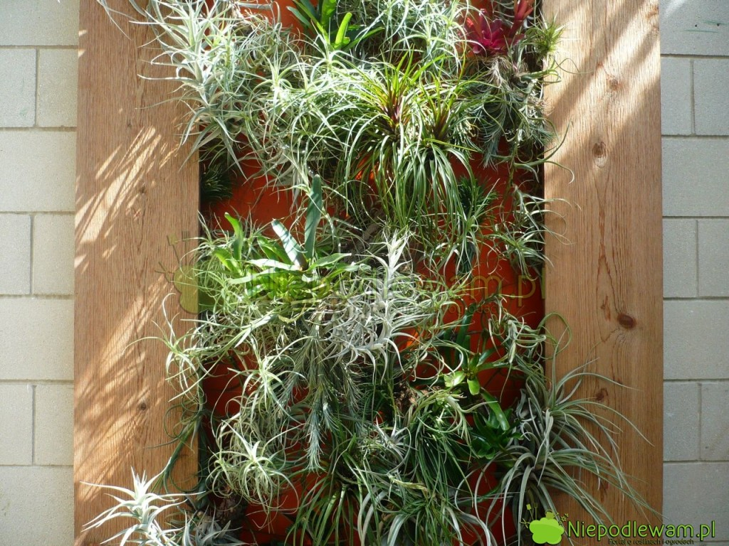 Ogród wertykalny z egzotycznymi roślinami w oranżerii. Fot. Niepodlewam