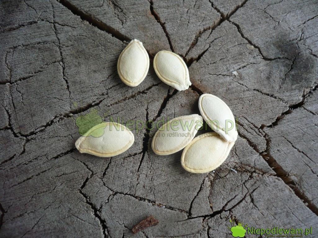 Nasiona dyni są duże. Łatwo je siać. Fot. Niepodlewam