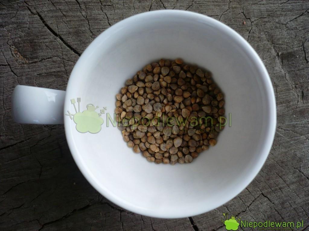 Nasiona szpinaku. Fot. Niepodlewam
