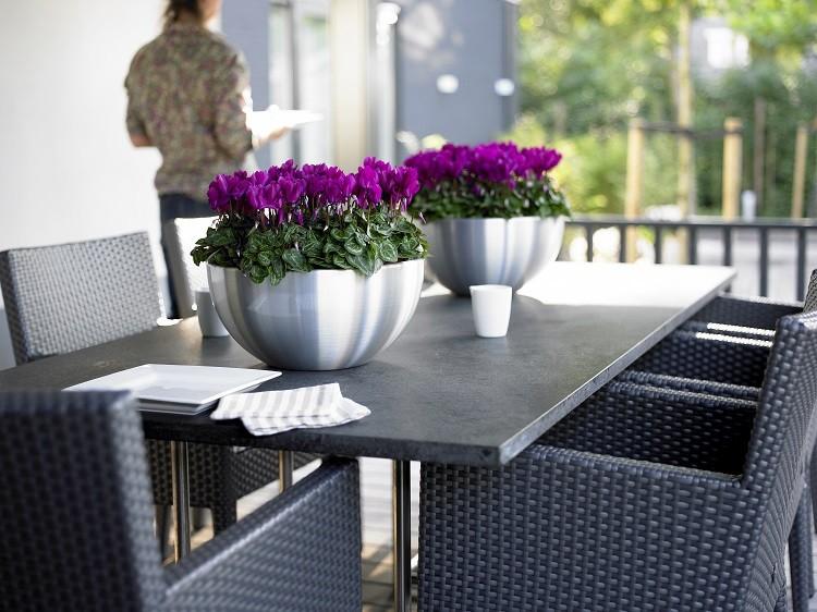 Cyklameny perskie to elegancja dekoracja np. stołu. Fot. Flower Council of Holland/thejoyofplants.co.uk