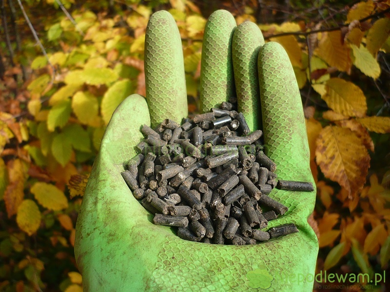 Obornik granulowany bydlęcy to bardzo dobry nawóz do ogrodu. Nie ma niemiłego zapachu i nie przyciąga much. Fot. Niepodlewam