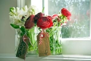 Jaskier azjatycki Aazur Red. Fot. iBulb