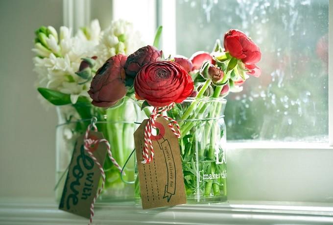 Jaskier azjatycki Aazur Red. Fot.iBulb