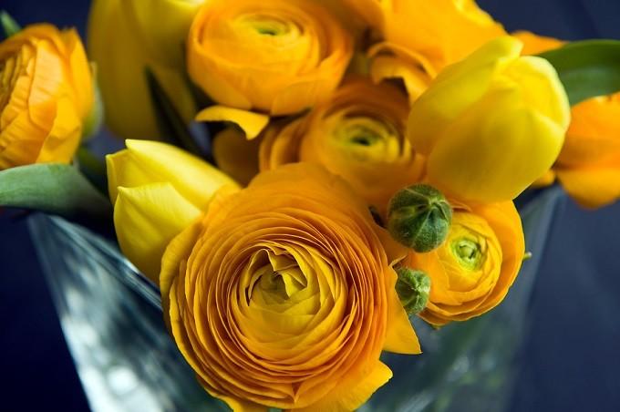 Jaskier azjatycki Elegance Yellow. Fot.iBulb