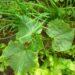 Przyśpieszanie kiełkowania ogórków – jak moczyć nasiona