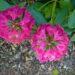 Zakwaszanie ziemi w ogrodzie – 10 sposobów