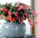 Kaktus bożonarodzeniowy – uprawa, rozmnażanie, cięcie