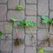 Sadzenie truskawek latem