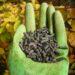 Obornik granulowany bydlęcy - skład i zastosowanie